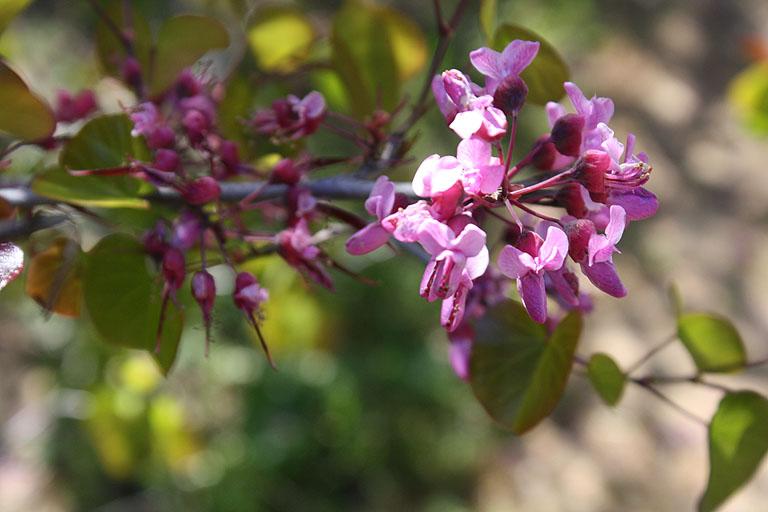 Blumen in einem Baum